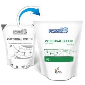 Active Intestinal Colon