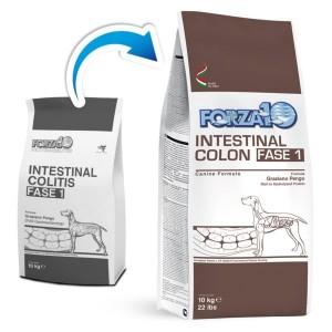 Active Intestinal Colon Fase 1