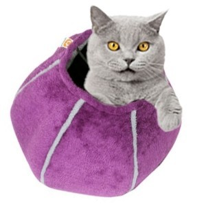 Cat Cave Viola