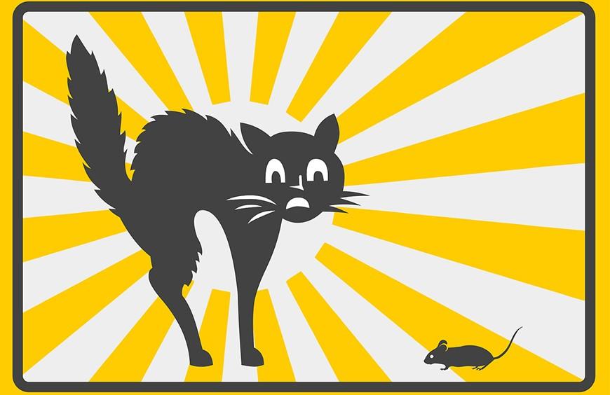 Una Paura da Gatti!